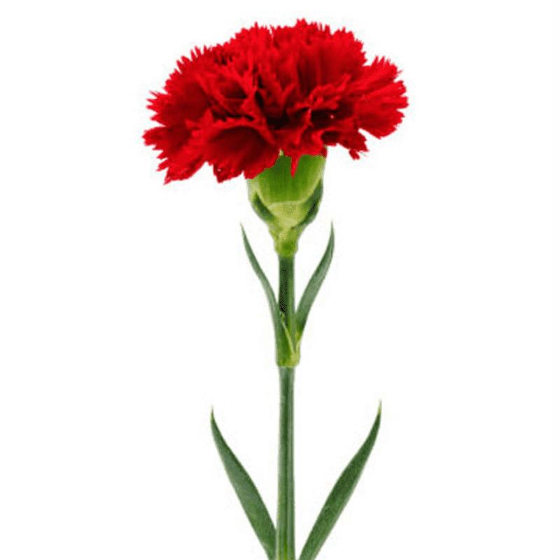 Домашние большие цветы фото и название отцом