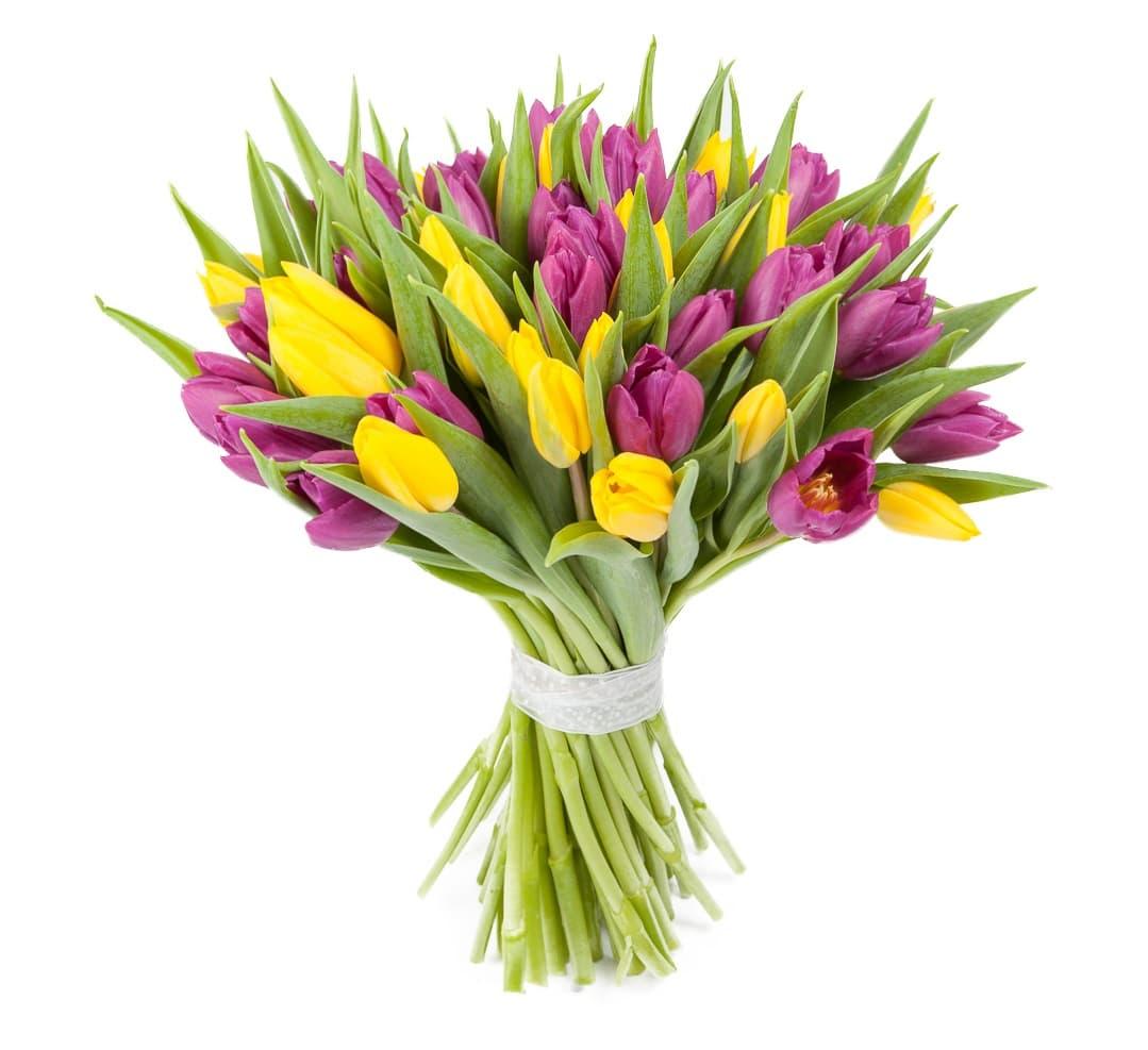 красивый букет из тюльпанов фото высоко